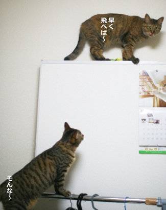 ikenaiのコピー