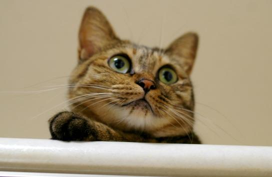 キララの大好きなものは猫草です