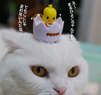 頭の上にhiyokoのコピー