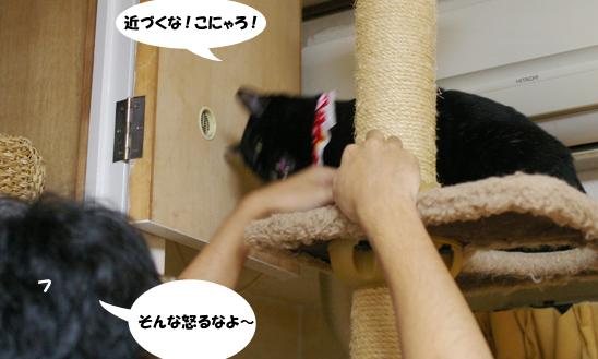ku-nityokkarifu-dpコピー
