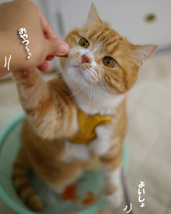 おやつ作戦かいし000 (1)のコピー