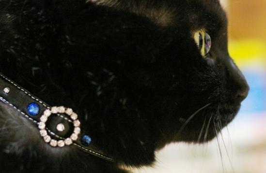 くーちゃんの瞳が綺麗に撮れた