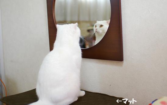 鏡の方が気になるタマさんのコピー