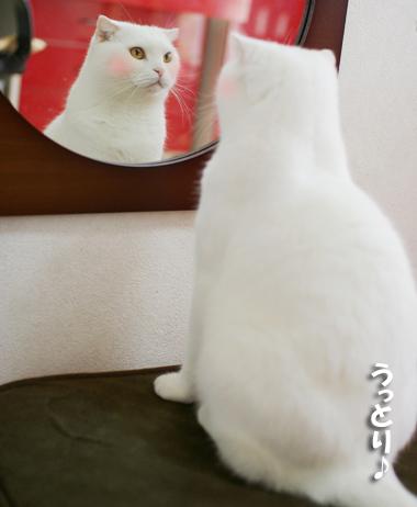 鏡に夢中で気づかない。コピー