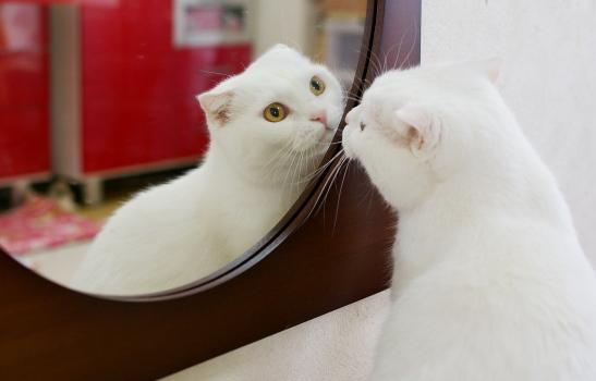 鏡に惚れるタマさん33333