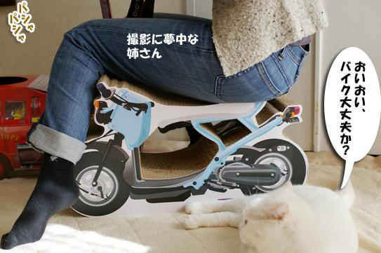 バイクの心配するタマさんピー