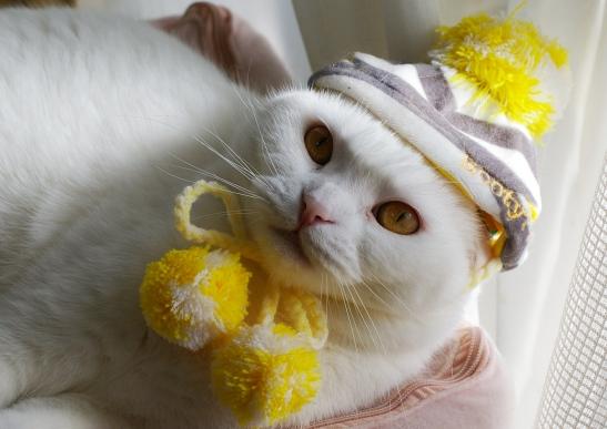 帽子タマさん121221123