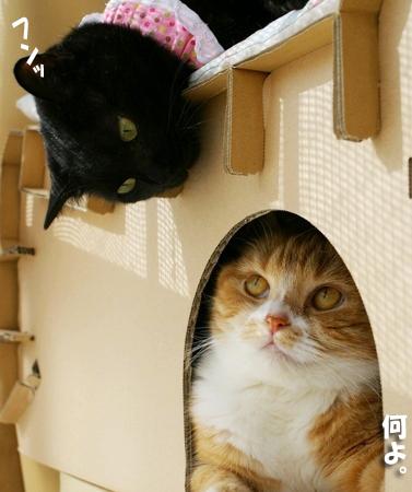 珍しい2ショットぷぷ&キララのコピー