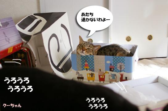 うろうろするくーちゃん21313のコピー