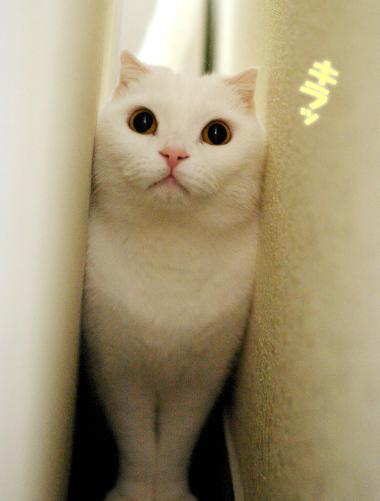僕だってたまには猫になるんだのコピー