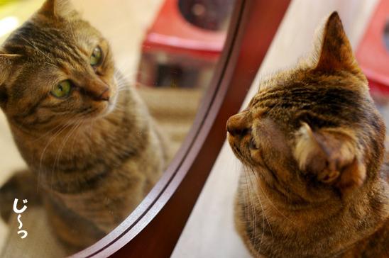 今日も鏡をみるき342コピー
