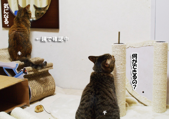 鏡で確認するキララっちのコピー