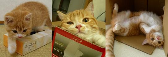 子猫から箱好きです9定 1のコピー
