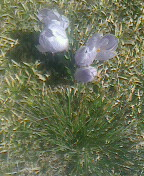 小さな花①