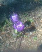 小さな花③