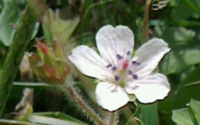 朝霧の花①