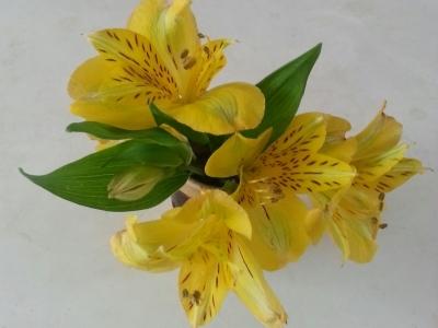 十月の花①