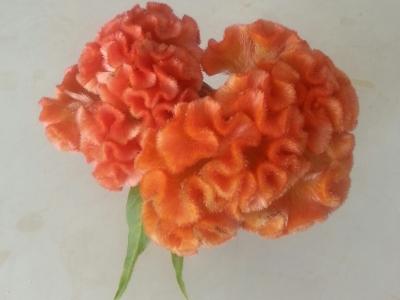 十月の花④