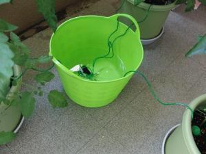 トマトの水の減り方
