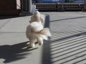 オレオと強風
