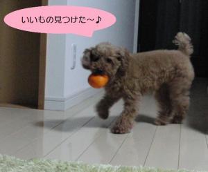 パセリと柿①