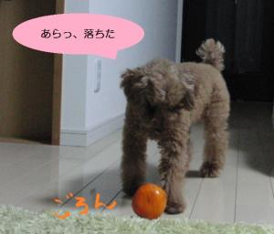 パセリと柿②