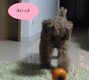 パセリと柿③