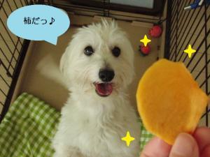 オレオと柿①