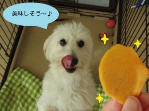 オレオと柿②