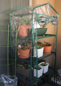 ビニール温室