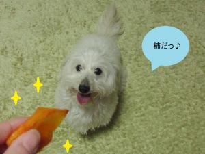 柿ジャンプ①