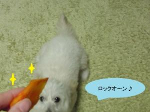 柿ジャンプ③