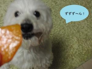 柿ジャンプ⑤