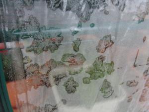 凍るビニール