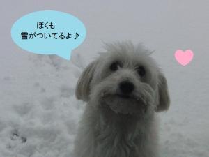 雪んこオレオ