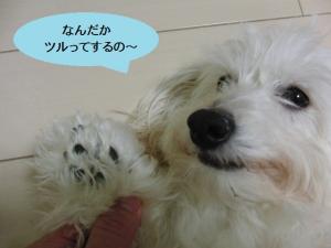 オレオ足裏before