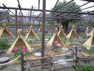 筥崎宮神苑花庭園1
