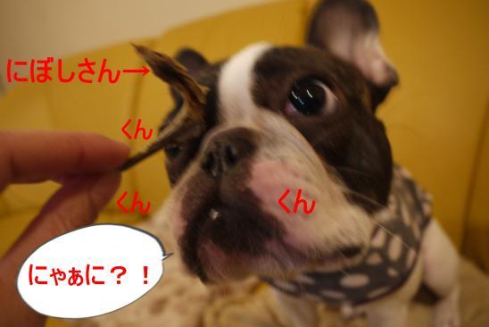 縺ォ・狙convert_20100414125303