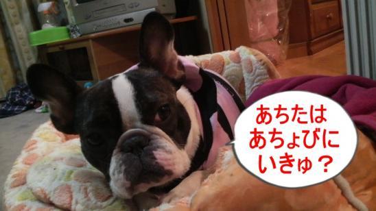 22_convert_20100506125117.jpg