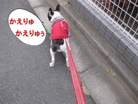 IMG_0043_convert_20101117113447.jpg