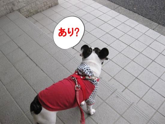 IMG_0049_convert_20101117114434.jpg