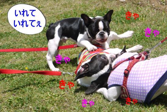 P1160179_convert_20100518123624.jpg