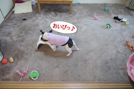 P1180372_convert_20100629114309.jpg