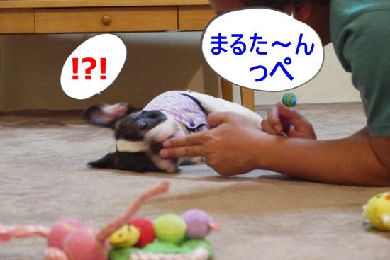 P1180412_convert_20100701115614.jpg