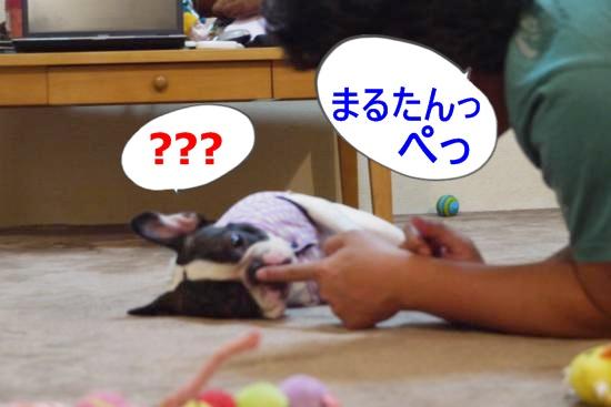 P1180413_convert_20100701115746.jpg