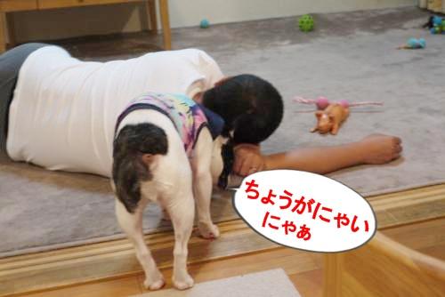 P1180709_convert_20100723103118.jpg