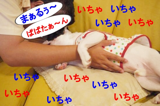 P1200139_convert_20100827145502.jpg