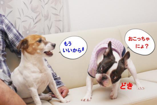 P1220241_convert_20101026114324.jpg