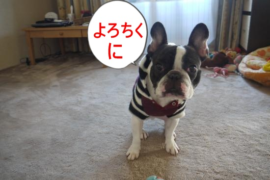 P1260160_convert_20101230233750.jpg