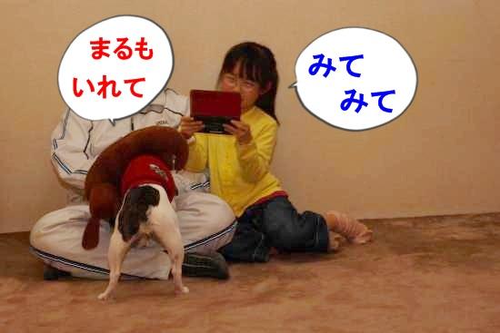 P1270519_convert_20110307113544.jpg